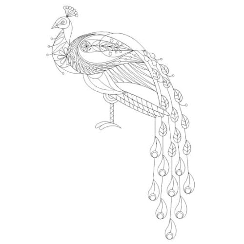 Princely Peacock